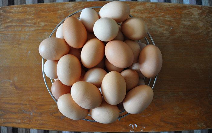 امرأة تقوم بتفقيس 3 فراخ بط من بيض مباع في المتجر… صور وفيديو
