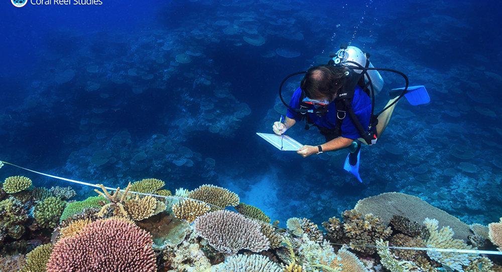 عالم يدرس الشعاب المرجانية في أستراليا