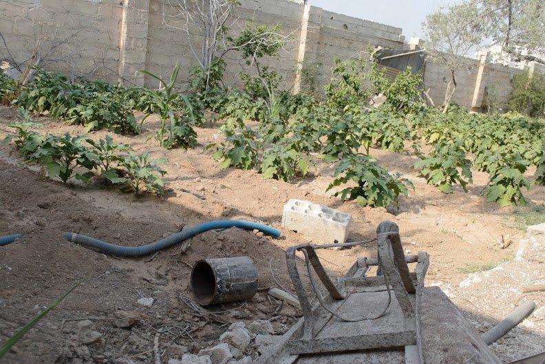 الزراعة في دير الزور