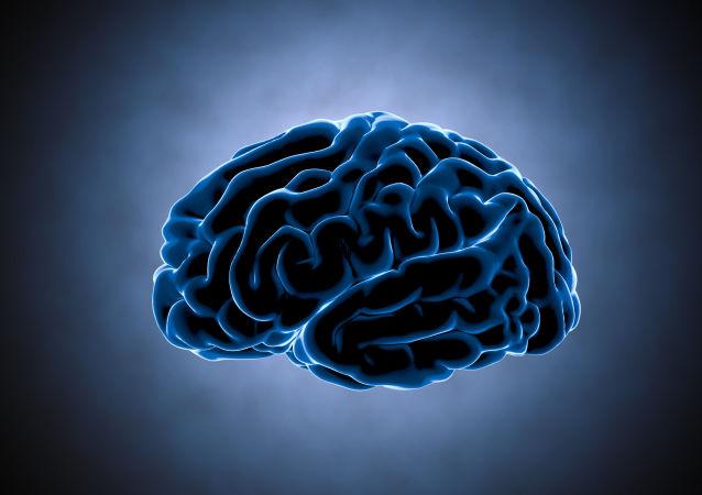 الدماغ