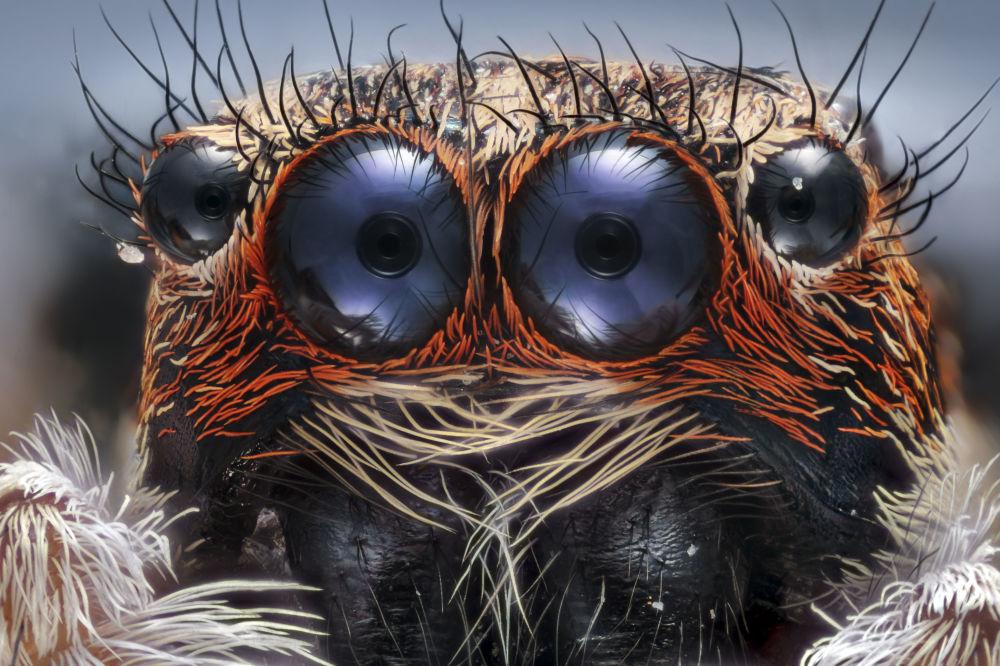 صورة لعيون عنكبوت والصورة مكبرة 6 مرات - فئة صور حائزة على جائزة شرف، اسطنبول، تركيا