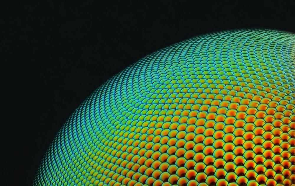 صورة لعين حشرة العنتر (فصيلة العَنْتـَر أو عُنتـَر أو عُنتُر فصيلة من الحشرات تعدوا على الحشرات الأخرى وتفترسها) والصورة مكبرة 20 مرة - فئة صور متميزة،  الإمارات العربية المتحدة