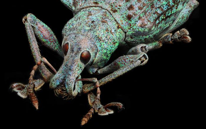 على رأسها الشكولاتة والقهوة.. أطعمة شائعة تخفي بداخلها حشرات
