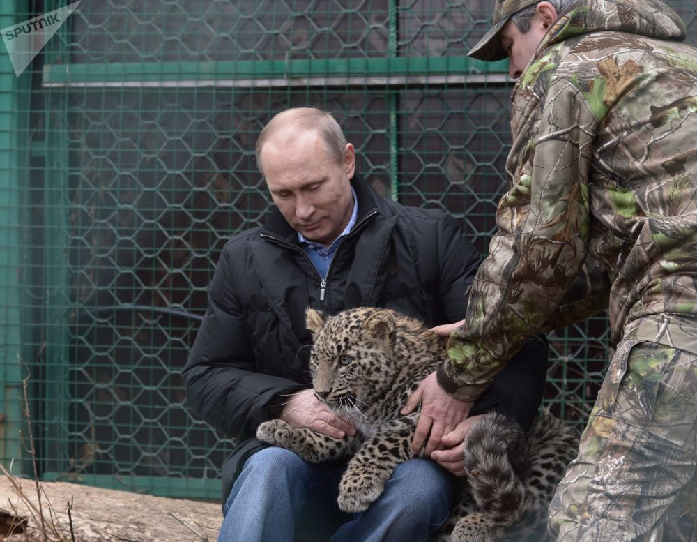 الرئيس فلاديمير بوتين يحمل فهدا صغيرا في الحديقة العامة بسوتشي، روسيا