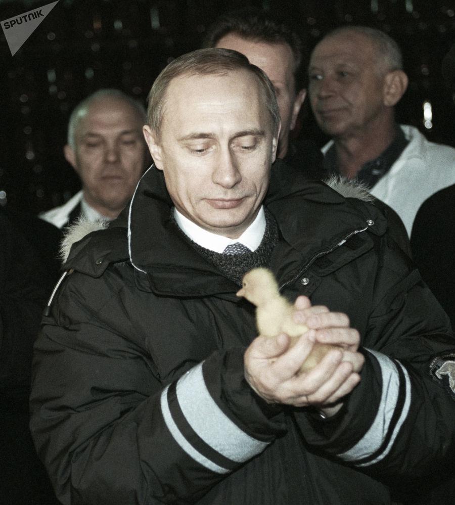 الرئيس فلاديمير بوتين يمسك بصوص صغير خلال زيارته لمزرعة الدواجن كولوس، روسيا عام 2000