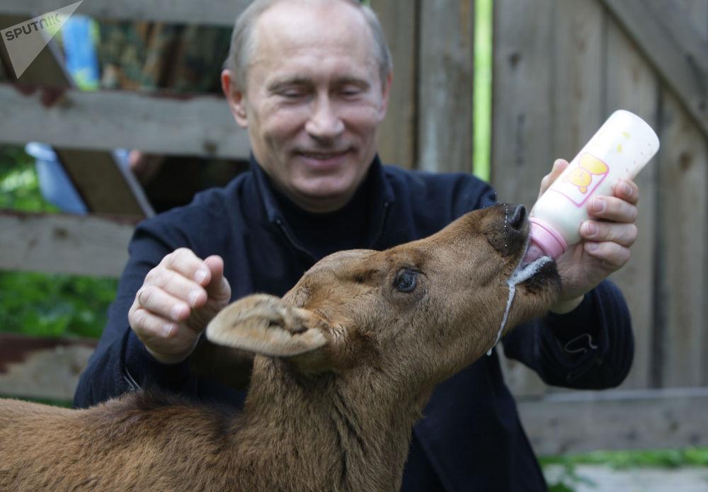 فلاديمير بوتين في المحمية الطبيعية لوسيني أوستروف بشمال شرق موسكو، روسيا