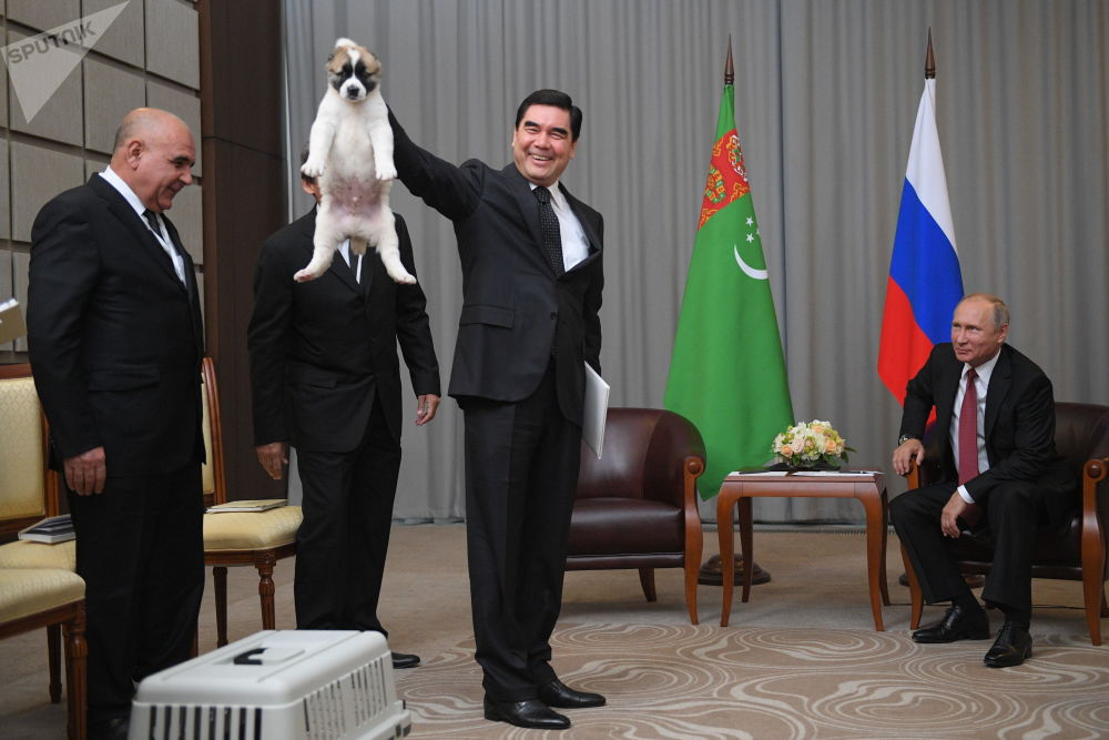 هنأ رئيس تركمانستان غوربانغولي بيرديموحيدوف نظيره الروسي فلاديمير بوتين في عيد ميلاده الـ65 وأهداه جروا من فصيلة الأباي يدعى فيرني والذي يعني باللغة الروسية الوفي.