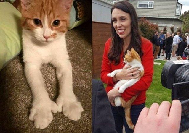 موت قطة رئيسة وزراء نيوزيلندا في حادث مرور