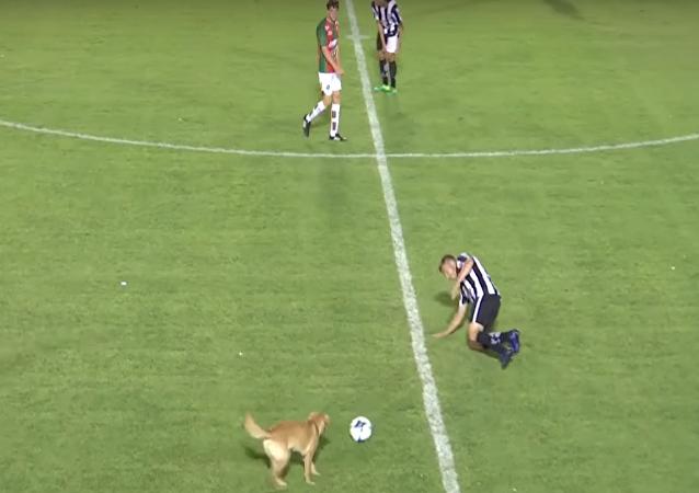 كلب في معلب كرة قدم