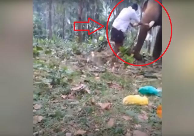 فيل يهاجم شاب بطريقة شرسة