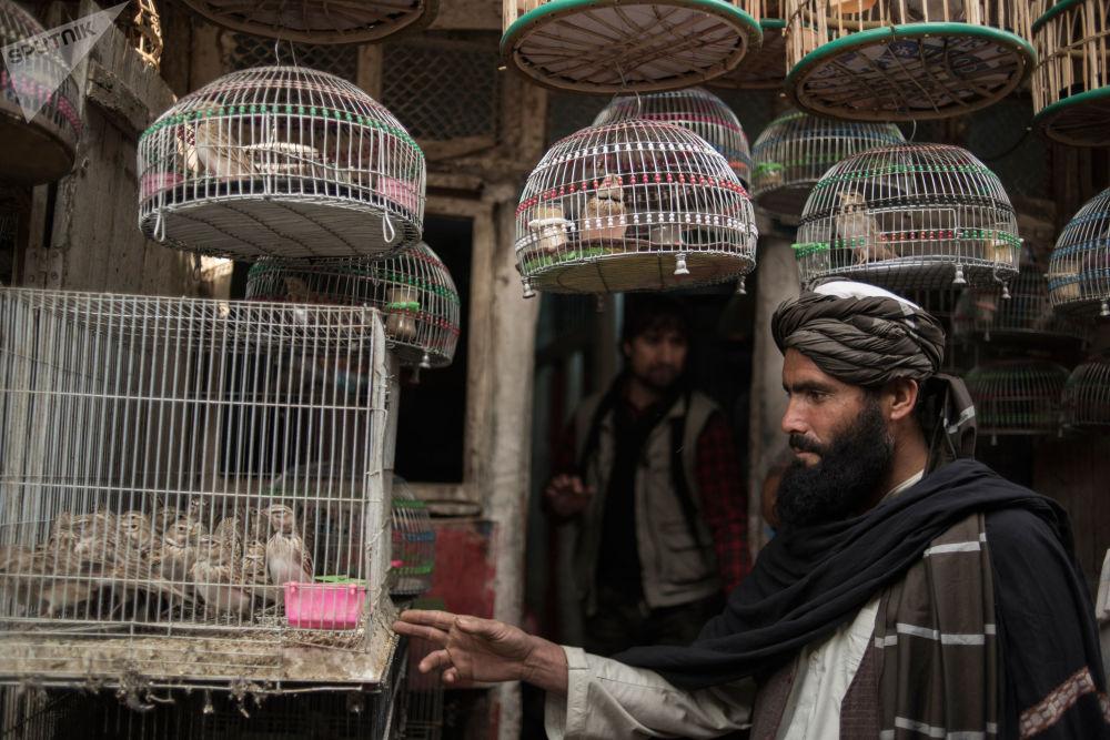 البائع والمشتري في سوق للطيور في كابول، أفغانستان