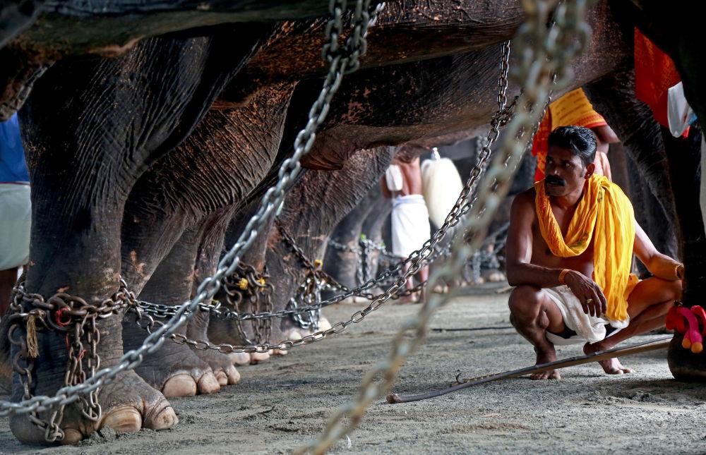 ماهوت يحرس الفيلة خلال مهرجان فريشيكولسافام في الهند، 18 نوفمبر/ تشرين الثاني 2017