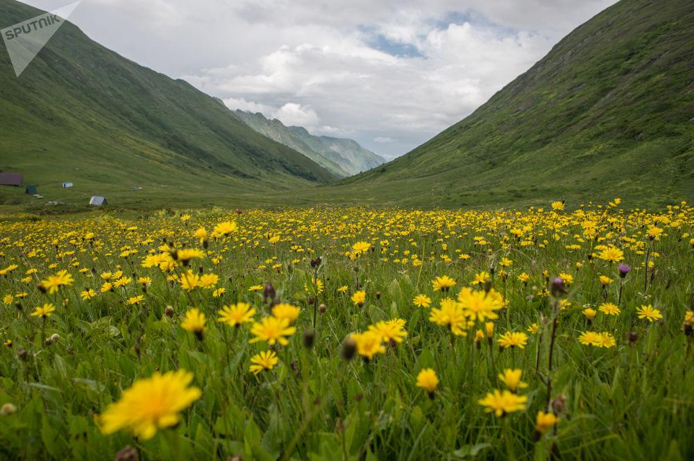 المحمية الطبيعية الحكومية القوقازية