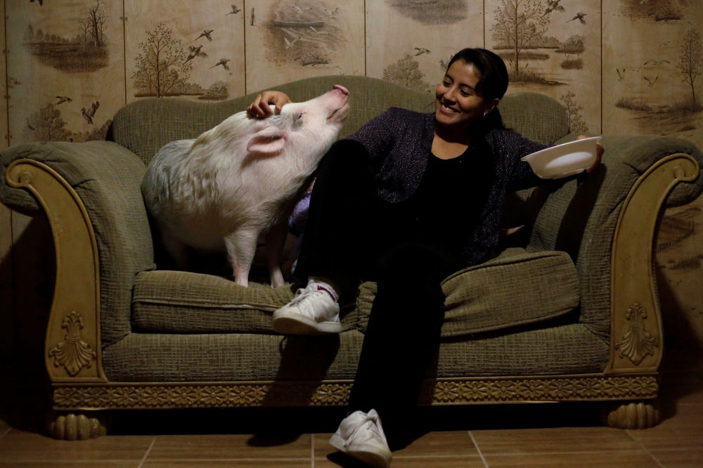 فتاة تدلع حيوانها الأليف بالو، المكسيك 4 ديسمبر/ كانون الأول 2017