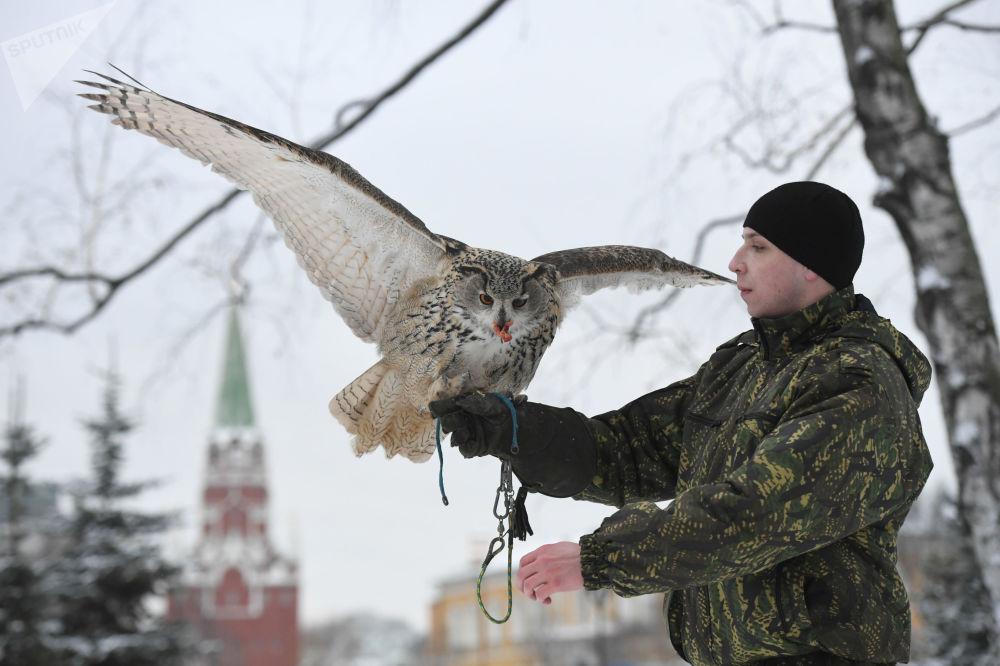 جندي من طيور حرس الكرملين يمسك طائر البوم في موسكو