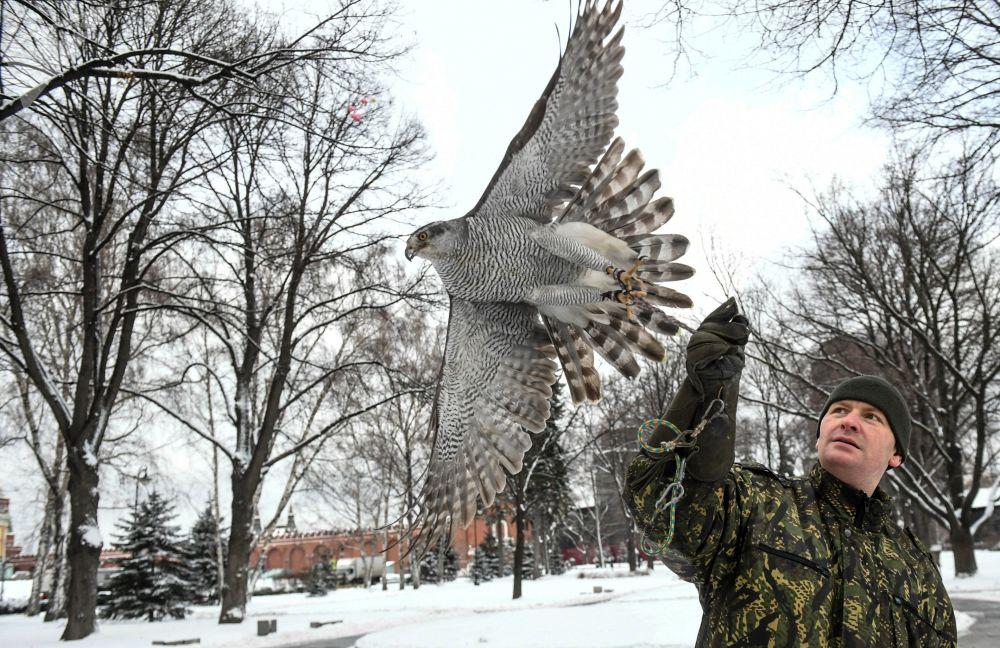 جندي من طيور حرس الكرملين يمسك صقرا في موسكو