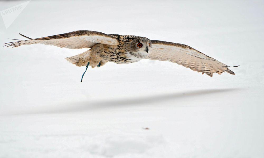 بوم في خدمة طيور حرس الكرملين