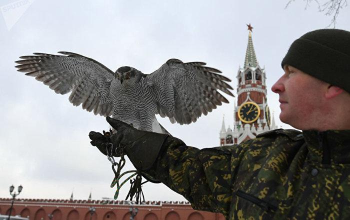 جندي من طيور حرس الكرملين يمسك بالصقر في موسكو