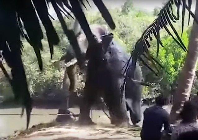بالفيديو.. انقاذ فيل غارق فى بركة طين فى الهند