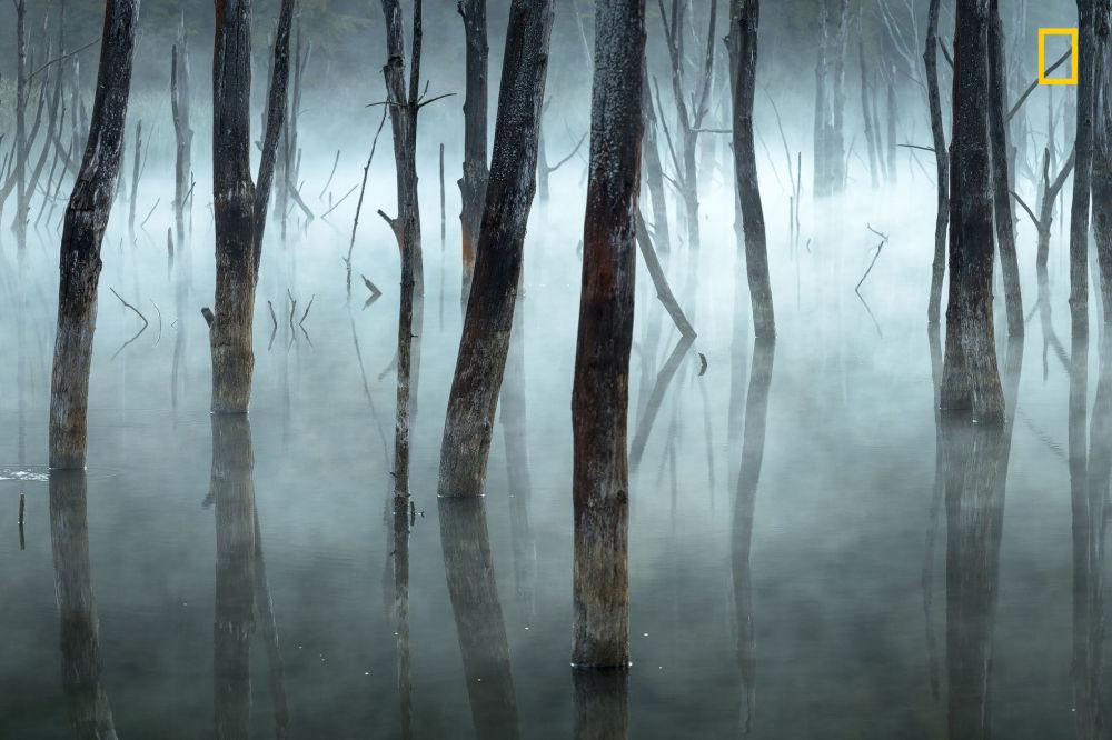 مسابقة ناشيونال جيوغرافيك للطبيعة لعام 2017 - المصور غيورغي بوبا، صورة بعنوان الأشجار الميتة في غابة ساحرة (Dead trees in a natural dam, from an enchanted forest) في بحيرة سوجديل برومانيا