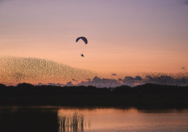 طيور الزرزور