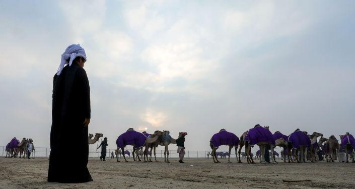 مهرجان الظفرة للإبل في الإمارات المتحدة، 23 ديسمبر/ كانون الأول 2017