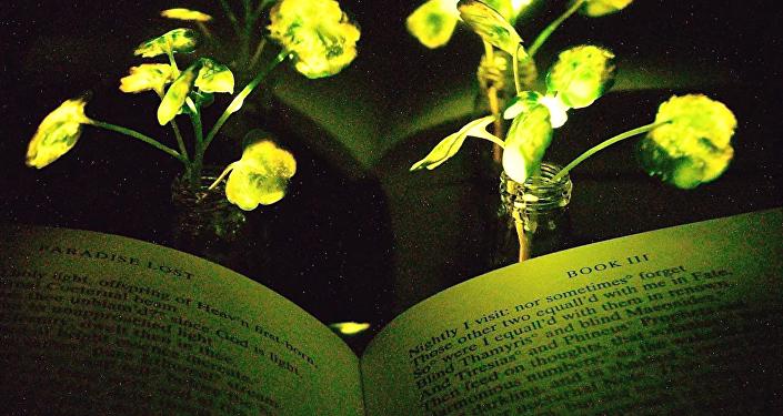 نباتات مضيئة