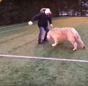 نمر يلعب كرة القدم