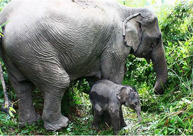 فيل صغير مع أمه