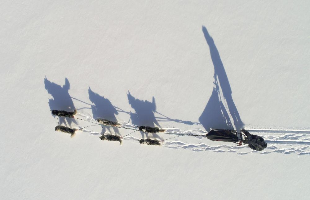 زلاجة كلاب الهاسكي تعبر بالقرب من كراسنويارسك، روسيا 6 فبراير/ شباط 2018