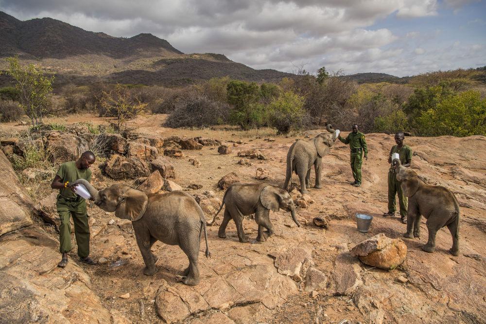 مسابقة صورة الصحافة العالمية لعام 2018 - صورة بعنوان المحاربون الذين كانوا يخشون الفيلة يوما، أصبحوا الآن يحمونهم للمصورة آمي فيتاليه، في فئة التصوير أخبار الطبيعة