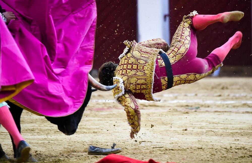 مصارع الثيران الإسباني إيل خولي يسقط خلال مصارعة الثيران في حلبة مصارعة لا سانتا ماريا في بوغوتا، كولومبيا 18 فبراير/ شباط 2018