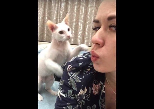قطة تصفع صاحبتها