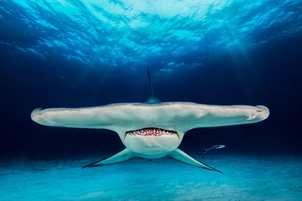 مسابقة صور تحت الماء لعام 2018 - صورة في المرتبة الثانيةThe Hammer للمصور البولندي جاكوب ديغي، في فئة Up & Coming