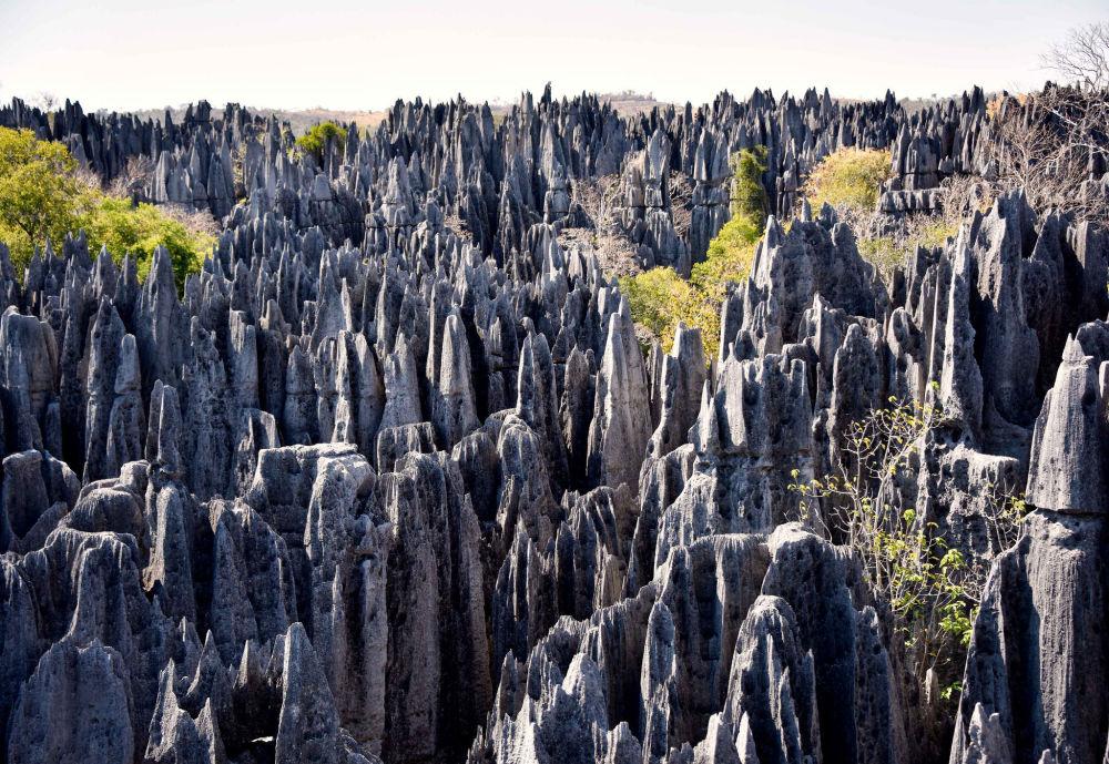 المحمية الطبيعية في تسينجي دي بيماراها، مدغشقر