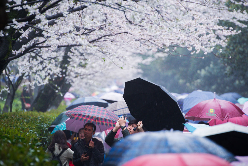 مواطنون يستمتعون بأشجار الكرز التي تفتحت أزهارها في حديقة جامعة ووهان، الصين 17 مارس/ آذار 2018