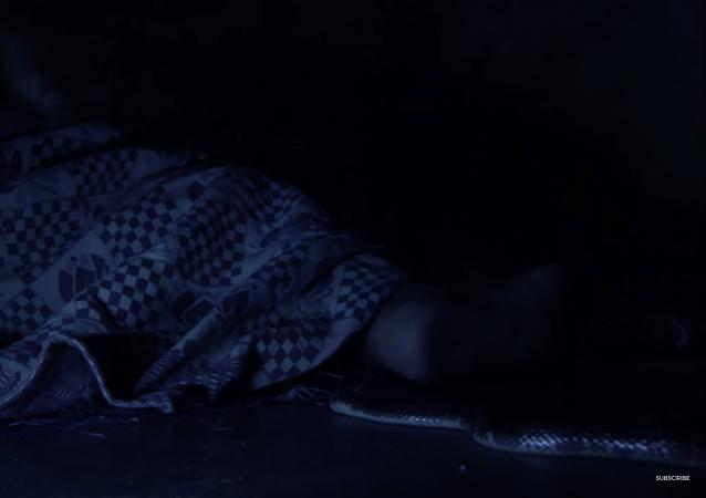 ثعبان يحاول لدغ شخص وهو نائم