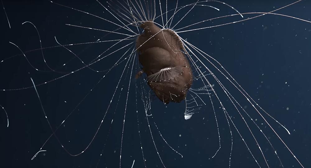 كائنات المحيط الأكثر غموضا