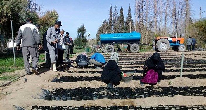الزراعة في ريف دير الزور الغربي