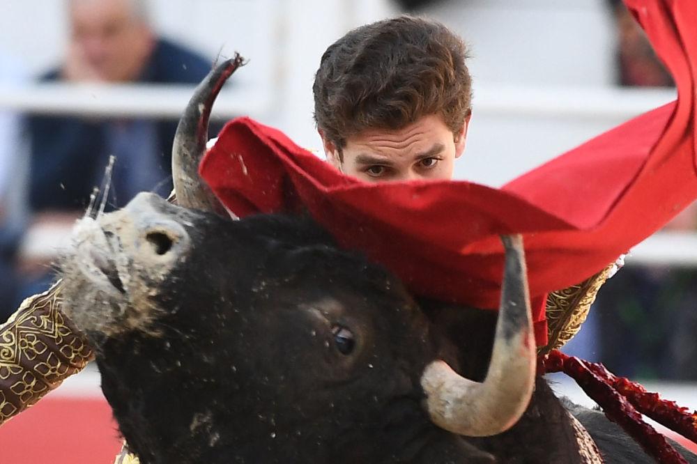 مصارع الثيران الإسباني جينس مارين خلال عرض فيريا دو ريز في أرليز، جنوب فرنسا 1 أبريل/ نيسان 2018