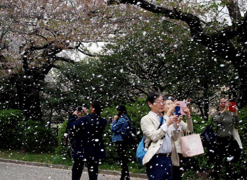 تفتح أزهار شجر الكرز في طوكيو، اليابان 2 أبريل/ نيسان 2018
