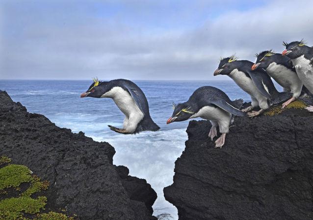 مسابقة صور الصحافة العالمية لعام 2018 - صورة بعنوان اقفز للمصور توماس ب. بيشاك من ألمانيا/ جنوب أفريقيا، الفائزة بالمرتبة الثانية في فئة التصوير الطبيعة