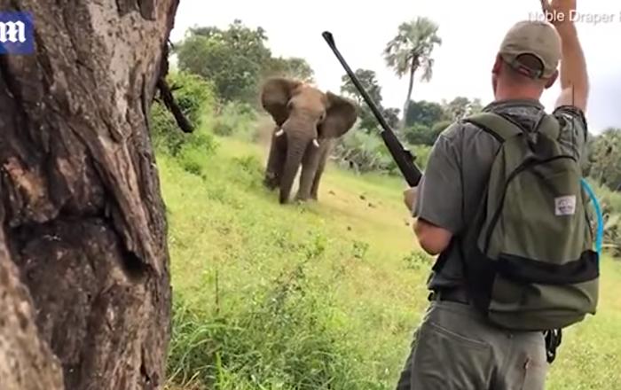 فيل غاضب يهاجم السياح خلال رحلة سفاري