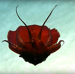 مخلوق غريب في خليج المكسيك