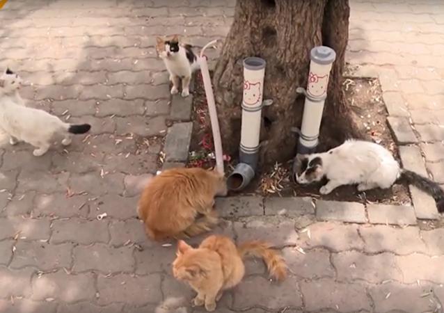 إطعام القطط - مبادرة خيرية جديدة في دمشق
