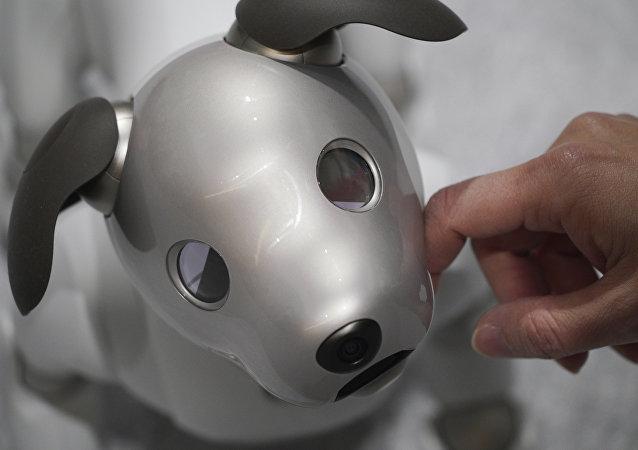 الكلب الآلي أيبو