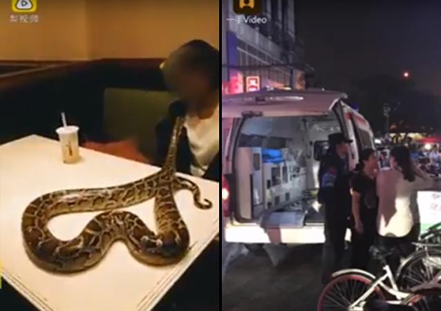 شاب يدعو ثعبان ضخم لتناول العشاء معه في مطعم