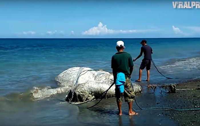 وحش يظهر من أعماق المحيطات في الفلبين