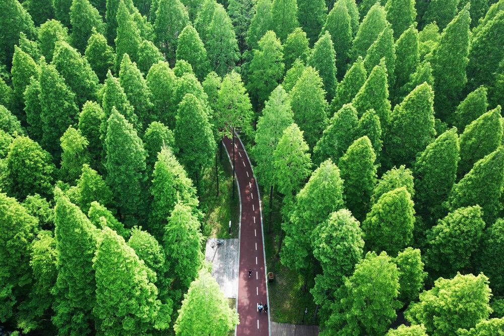 مشهد يطل على غابة يلو سي ناشونال فوريست بارك (Yellow Sea National Forest Park) في دونغتاي، شرق الصين