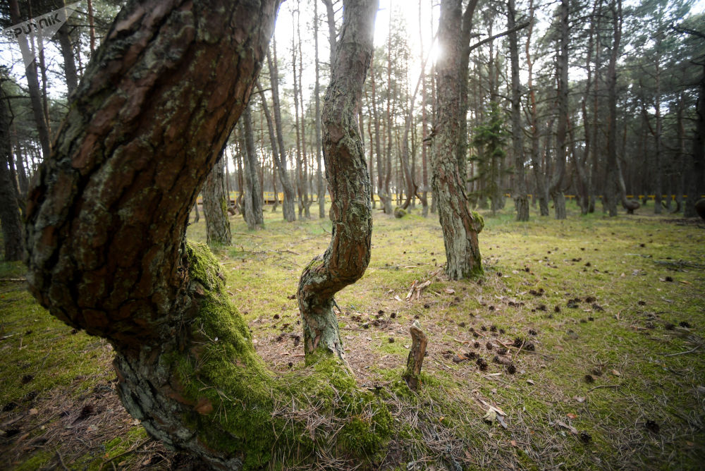 الغابة الراقصة في برزخ قورش